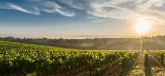 Sassicaia - fiore all'occhiello dei vini toscani