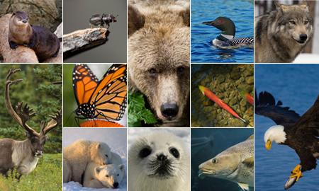Canada retour à la nature site web