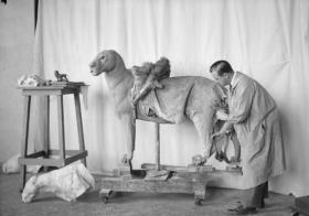 (c) AMNH 1930