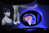 amnh-barin-brain