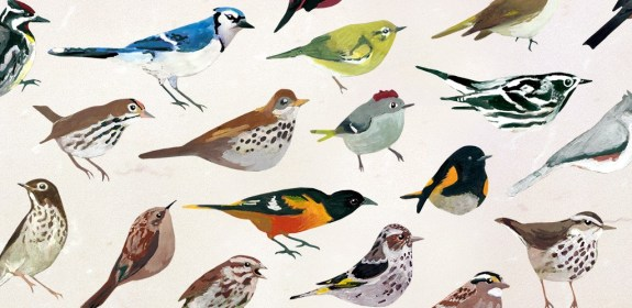 carnegie museums studio birds appli 3
