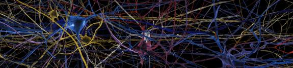 cité des sciences expo cerveau 5