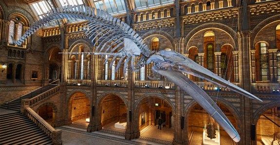 nhm london blue-whale-hintze-hall-news