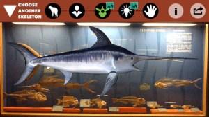 smiths bones app 3 screen520x924