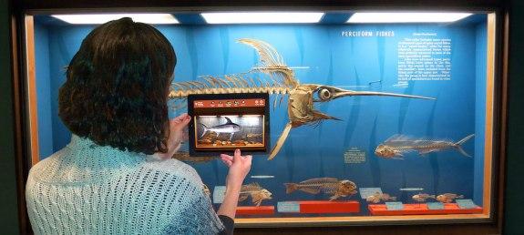 smithsonian bones app swordfish-app