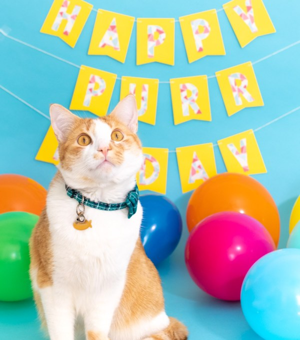 cat in front of banner for cat birthday celebration