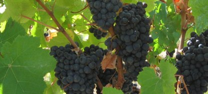 vinhos-de-lisboa