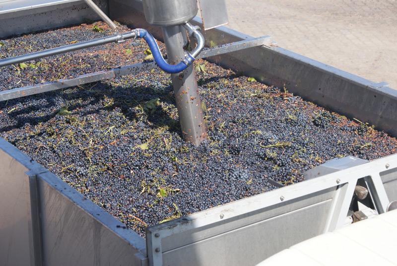 Receção de uva, Desengace, Esmagamento e Esgotamento
