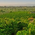 Vinhos-do-Alentejo-1