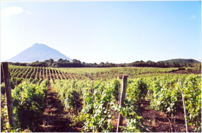 Vinhas do Pico um Partimónio Mundial e Histórico da UNESCO 5