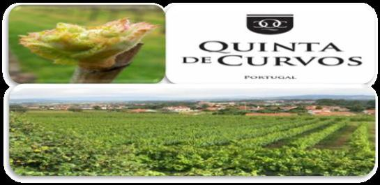 QUINTA DE CURVOS - SOCIEDADE AGRÍCOLA, S.A. Lugar de Cerqueiral 4740-435 Forjães, Esposende Portugal T. +351 253 871 555 Tm. +351 964 770 088 geral@quintadecurvos.pt