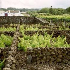 Weinanbau in Biscoitos