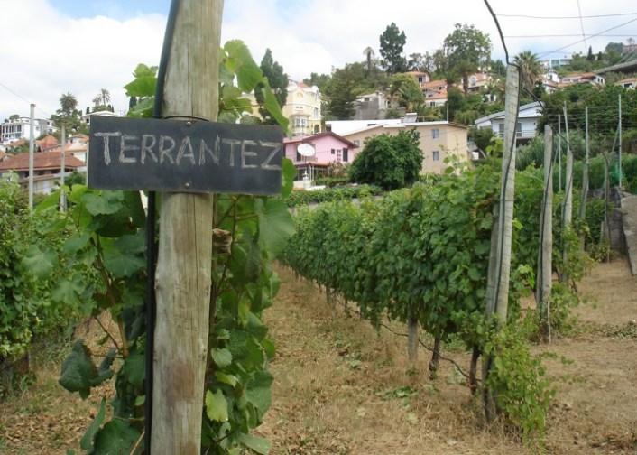agro-turismo-vinicola-madeira-05-terrantez
