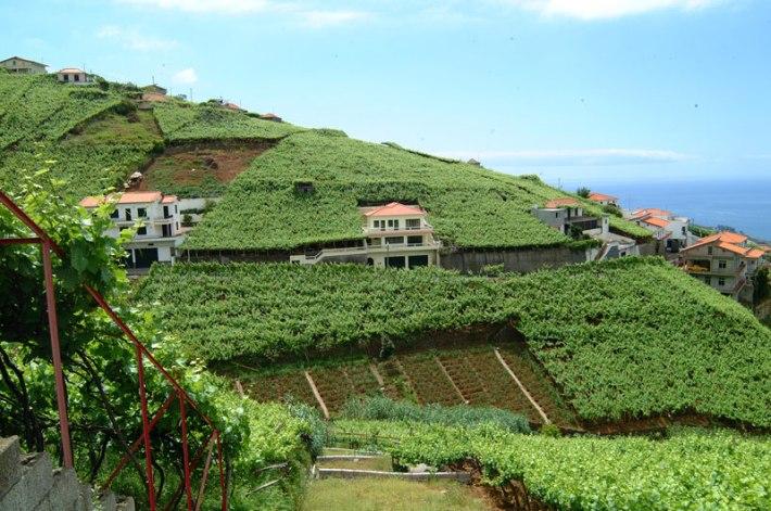 A Bela História do Vinho da Madeira 10