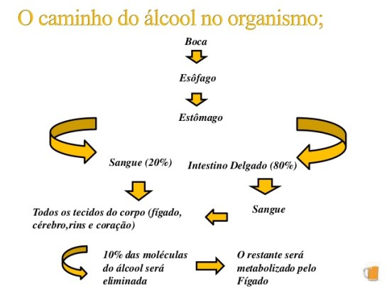Metabolismo do Álcool3