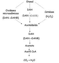 Metabolismo do Álcool5