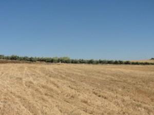 Preparando terreno para novas vinhas