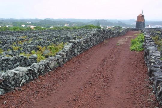 Os muros em torno das vinhas, chamados de currais !