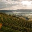 vignoble-dirouleguy-pays-basque