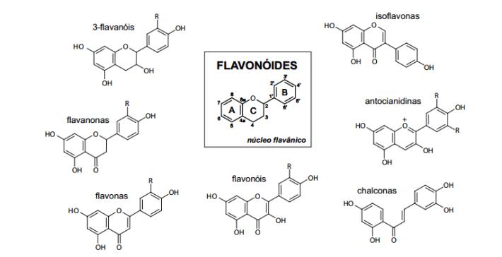 flavonoides-geral
