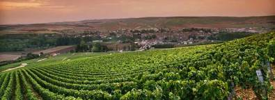 chablis-grand-cru-vineyards-1