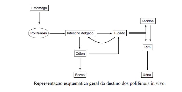 polifenois-9
