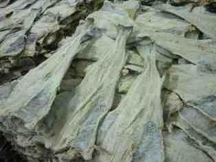 bacalhau-salgado-seco