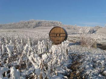 les-vignes-derriere-en-hiver1