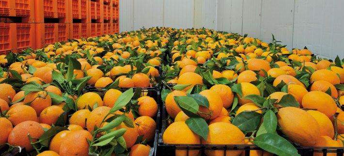 laranja-com-folha