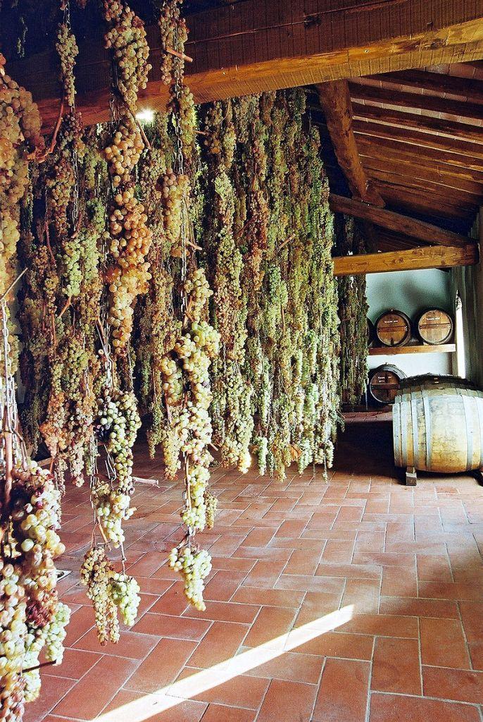 Malvasia para o famoso Vin Santo