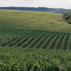 cricova-winery-vinhas-1