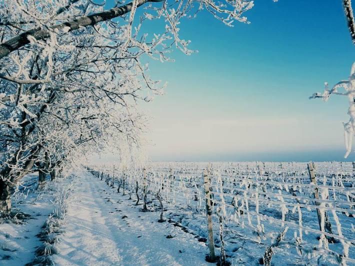 cricova-winery-vinhas-6