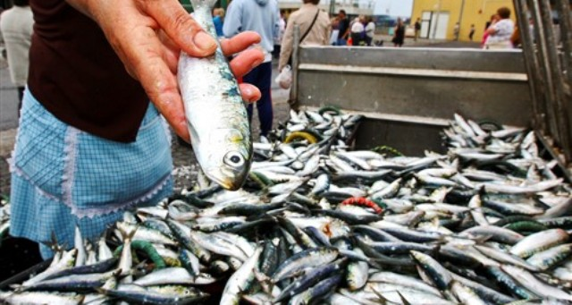 sardinha-2
