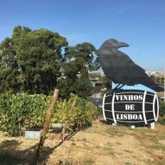 1-dia-no-parque-viticola-de-lisboa-4