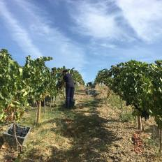 1-dia-no-parque-viticola-de-lisboa-5