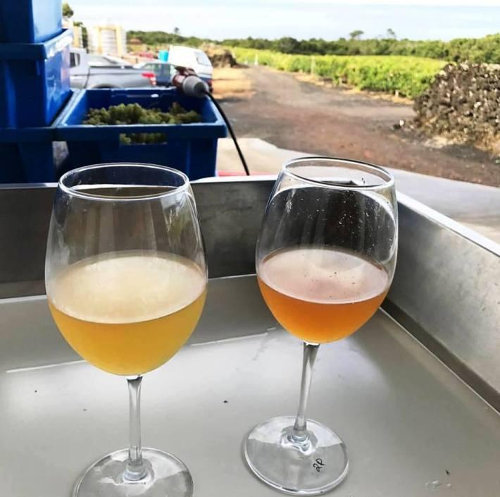 Clarificação de mosto e envelhecimento do vinho 2