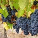 CM Wines TN 6