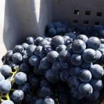 CM Wines TN e Alfrocheiro 2