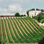 Loire_vineyard