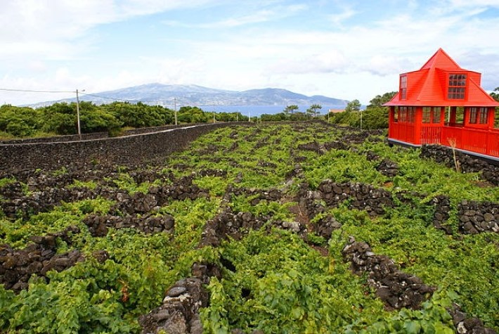 Portugal entre os 10 maiores países produtores de vinho 5