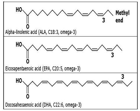 Ácidos gordos omega 3