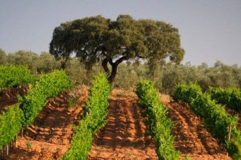 Herdade-Dos-Grous-Vineyard