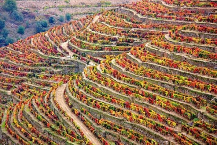 Magia do Douro no Outono - Fonte Douro Best