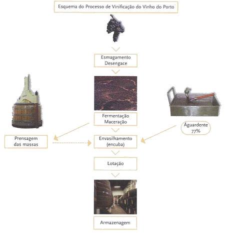 Processo de vinificação