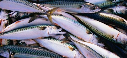 Cavala um peixe azul e baixo em colestrol1