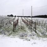 Vinhas com neve T Marechal