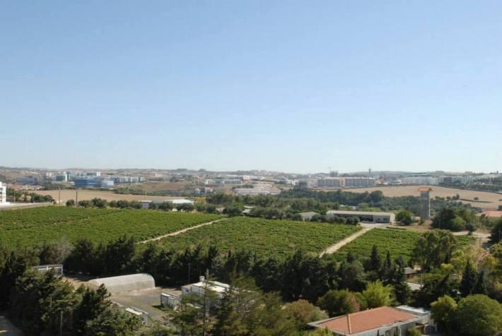 Uma bela paisagem de vinha