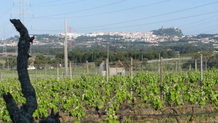 A região de vinhos da Península de Setúbal5