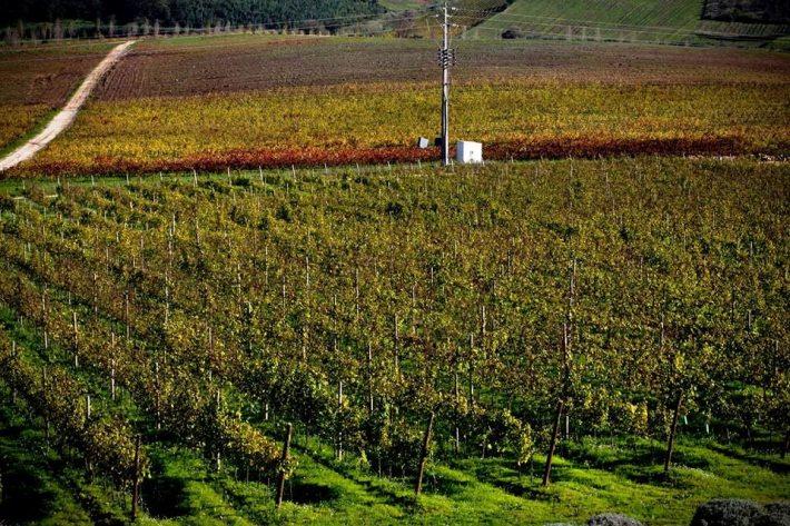 Vinhos com Denominação de Origem Controlada de Torres Vedras2