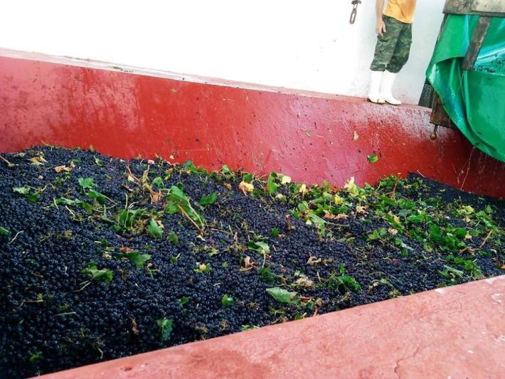 qcb merlot Vinhos com Denominação de Origem Controlada de Torres Vedras